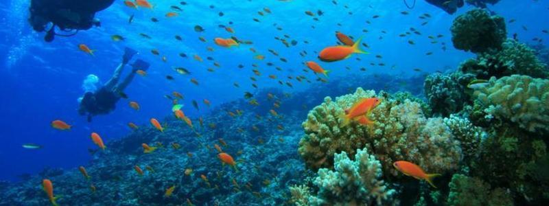 Permalien vers:Plongée sous marine